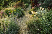 Bench by gravel path, nepeta, Aquilegia vulgaris