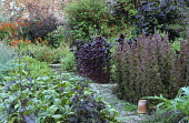 "Potager, brick path, asparagus, beet, bolted lettuce ""Bijou"", Atriplex hortensis rubra,"