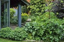 Alchemilla mollis, acanthus, Angelica archangelica