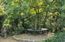 Circular tree seat on paved circle under Magnolia x soulangeana