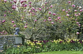 Magnolia, Virginia Woolf bust, Tulip 'Negrita', 'Apricot Beauty', 'Queen of Night' and 'Spring Green'