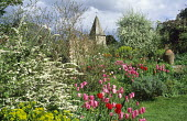 View to church, spiraea, border, Tulipa 'China Pink' and Tulipa 'Apricot Beauty'