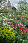 Spiraea, Tulipa 'China Pink' and Tulipa 'Apricot Beauty', view to church