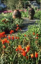 Tulipa 'Ballerina', Euphoria griffithii, terracotta pots