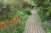 Brick path, wheelbarrow, Tulipa 'Ballerina', Tulipa 'Negrita', Euphorbia griffithii,