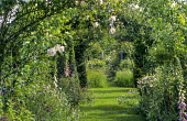 Fruit and vegetable garden, view through apple tunnel with roses, foxgloves and aquilegias