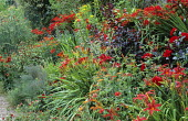 Red border, Hemerocallis 'Mrs Hugh Johnson', Crocosmia 'Lucifer', Achillea 'Feuerland', Prunus x cistena