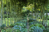 Path through beech avenue underplanted with hostas