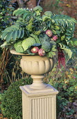 Floral arrangement in classical urn, Melianthus major, broccoli, cabbages, swedes
