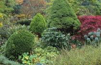 Autumn border, juniper, acer, euphorbia, rhus