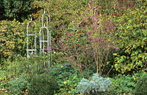 Autumn border, Callicarpa bodinieri, plant supports