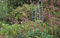 Autumn border, Callicarpa bodinieri, roses, plant supports