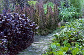 Potager, brick path, Amaranthus 'Hopi Red', bolted lettuce 'Bijou'