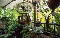 Lush balcony, parasol, cherub in cage, lantern, raised pond and fountain, bamboo, ferns, Cyathea medullaris