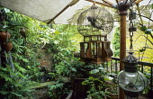 Lush balcony, parasol, cherub in cage, lantern, raised pond and terracotta lion wall fountain, bamboo, ferns