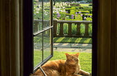 Cat, view through open window to parterre and iris beds