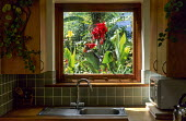 Framed view from kitchen inside house through window to cannas in exotic courtyard garden outside