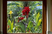 View through window to cannas in exotic courtyard garden