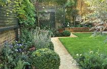Town garden, gravel path, lawn, trellis, olive tree, design: Claire Mee