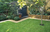Lawn, path, trellis masking shed, fig tree, design: Claire Mee