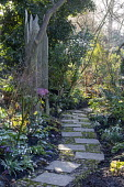 Paving slab and pebble path, wooden chair, Galanthus 'Icicle' and Galanthus 'Primrose Warburg'