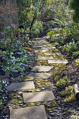 Paving slab and pebble path, Galanthus 'Icicle' and Galanthus 'Primrose Warburg'