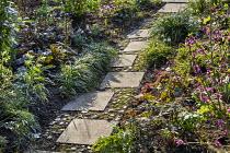 Paving slab and pebble path across border, Helleborus foetidus, Daphne mezereum