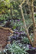Log-edged bark path, galanthus, cyclamen