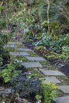 Paving slab and pebble path, snowdrops, Daphne mezereum, Euphorbia amygdaloides 'Purpurea', Galanthus 'Primrose Warburg', Galanthus 'Greenfinch' and Galanthus plicatus 'Diggory'