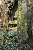 Snowdrops around base of tree, miscanthus, wooden arbour seat