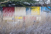 Colourful Mondrian-inspired wall behind grasses, Calamagrostis x acutiflora 'Overdam' and seedheads of Nigella damascena