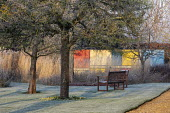 Wooden benches on frosty lawn, view to colourful Mondrian-inspired wall, Calamagrostis x acutiflora 'Overdam'