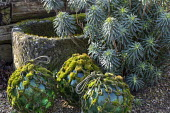 Moss-covered rope around glass ball ornaments, stone trough, euphorbia