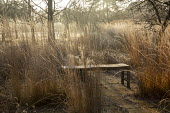 Wooden bench surrounded by Calamagrostis x acutiflora 'Overdam'