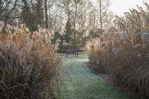 Wooden bench on lawn, Miscanthus sinensis 'Silberfeder'