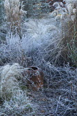 View across border of grasses in frost