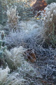View across border of grasses in frost to chair on patio