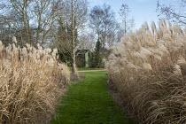 Grass path through borders of Miscanthus sinensis 'Silberfeder'