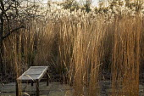 Wooden bench surrounded by grasses, Miscanthus sinensis 'Silberfeder', Calamagrostis x acutiflora 'Overdam'
