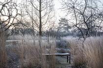 Wooden bench amongst grasses