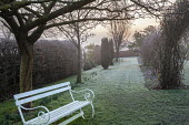 White bench under tree, frost on lawn