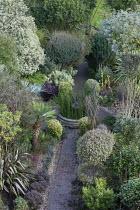 Pseudopanax ferox, Pseudopanax crassifolius, leptospermum, Rhamnus alaternus 'Argenteovariegata', Phormium tenax 'Sundowner', Pyrus salicifolia 'Pendula', Corokia buddlejoides 'Coco', pittosporum, Cha...
