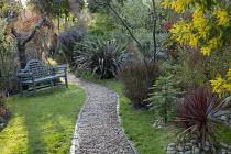 Gravel path, bench on lawn, Phormium 'Pink Stripe', Wollemia nobilis, Acacia dealbata, Cornus sanguinea 'Midwinter Fire'