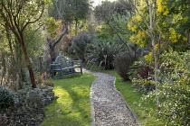 Gravel path, bench on lawn, Phormium 'Pink Stripe', Acacia dealbata, Arbutus unedo, Cornus sanguinea 'Midwinter Fire'