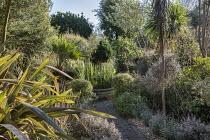 Pseudopanax ferox, Corokia x virgata 'Sunsplash', Pyrus salicifolia 'Pendula', Corokia buddlejoides 'Coco', Fatsia japonica, Equisetum hyemale around raised pond, Chamaerops humilis, Phormium 'Sundo...