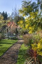 Gravel path, bench and table on lawn, Phormium 'Pink Stripe', Acacia dealbata, Cornus sanguinea 'Midwinter Fire'