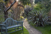 Gravel path, bench, Phormium 'Pink Stripe', Cornus sanguinea 'Midwinter Fire'