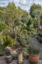 Phormium tenax 'Sundowner', Baloskion tetraphyllum, Chamaerops humilis, bird bath