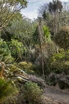 Pseudopanax ferox, Pseudopanax crassifolius, Rhamnus alaternus 'Argenteovariegata', Phormium tenax 'Sundowner', Pyrus salicifolia 'Pendula', Corokia buddlejoides 'Coco', Fatsia japonica