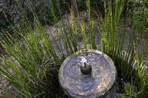 Equisetum hyemale in circular pond around bubbling fountain